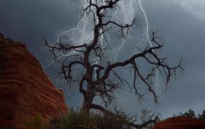 Stark Tree With Strom Approaching