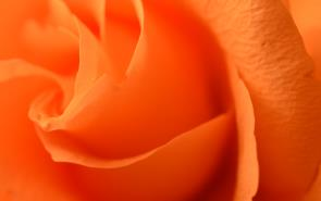Rose Soft Orange